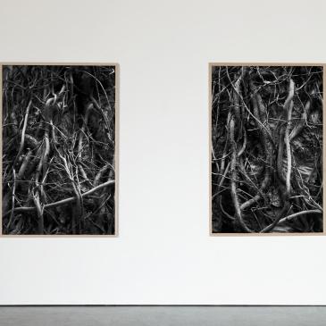 """""""Røtter # 01"""" og Røtter # 02"""" (2021), 100 x 150 cm"""